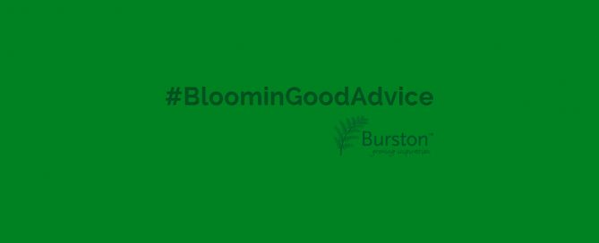 bloomingGoodAdvice from Burston Garden Centre
