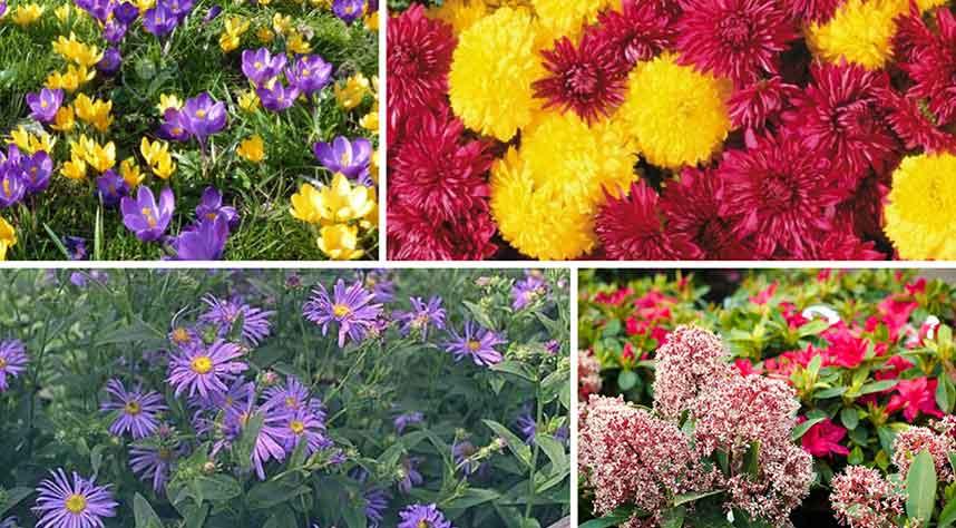 Autumn Flowers Collage - Burston Garden Centre