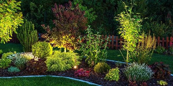 August jobs for the garden - Night Garden