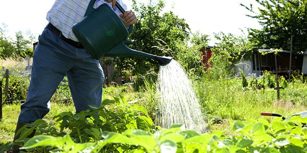 August jobs for the garden - Watering