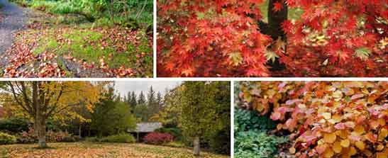 Autumn Colour Collage - Burston Garden Centre