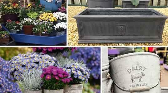 Autumn Planters Collage - Burston Garden Centre