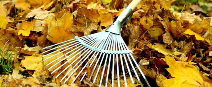 Autumn Tidy Up with Burston Garden Centre - Leaves
