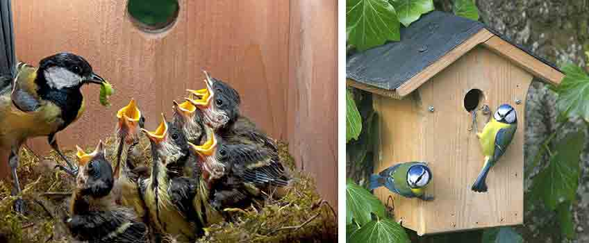 Bird Nesting Boxes - Burston Garden Centre