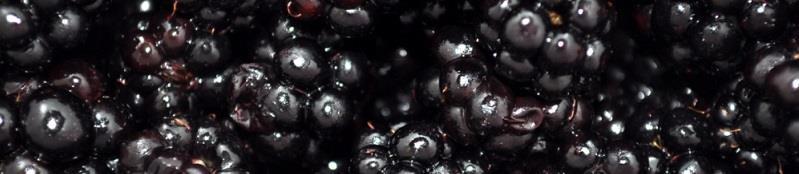 Grow Your Own Blackberries