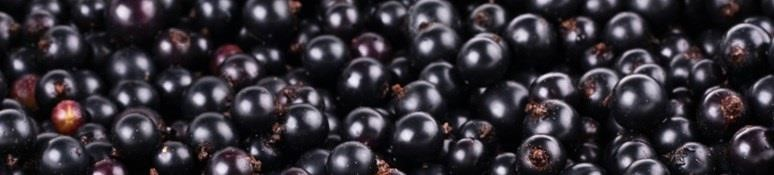 Grow Your Own Blackcurrants
