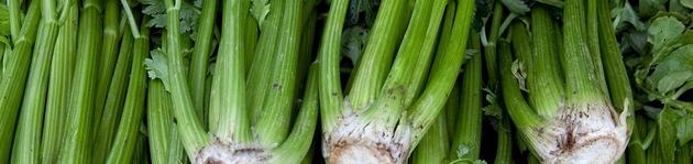Grow Your Own Celery - Burston Garden Centre