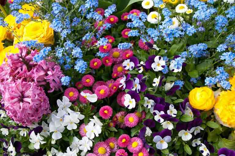 Flower of The Month - May. Burston Garden Centre