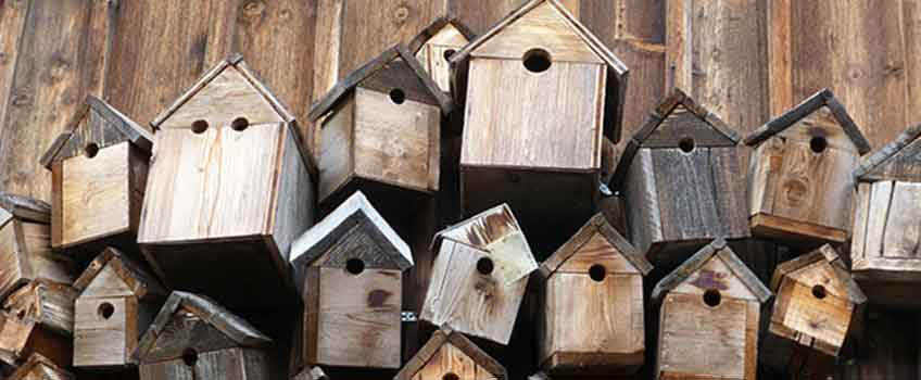 Garden Birds - Birdbox Week - Burston Garden Centre Blog