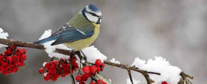 Garden Birds - Burston Garden Centre Blog