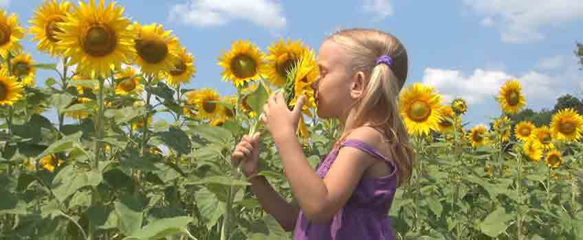 Gardening with Children - Sunflower