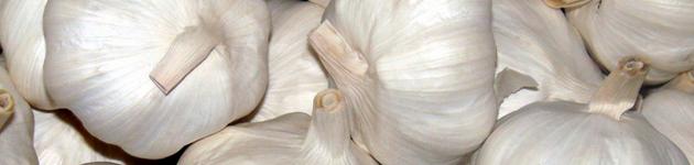 Grow Your Own Garlic - Burston Garden Centre