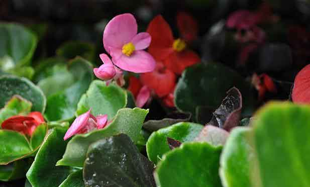 Getting your garden ready - Burston Garden Blog