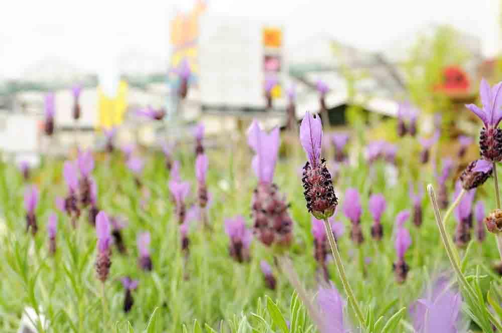 Hardy Plant Guarantee - Burston Garden Centre