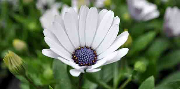 June jobs for the garden - bedding flower