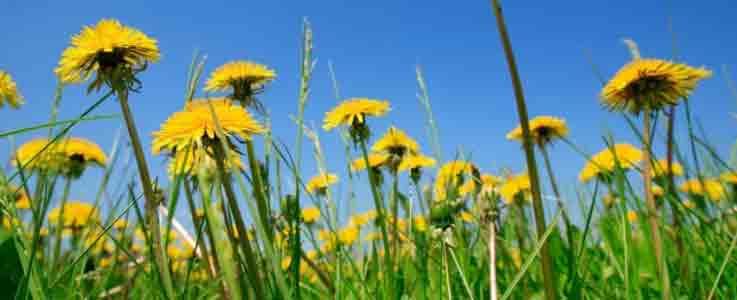 Keep Weeds at Bay