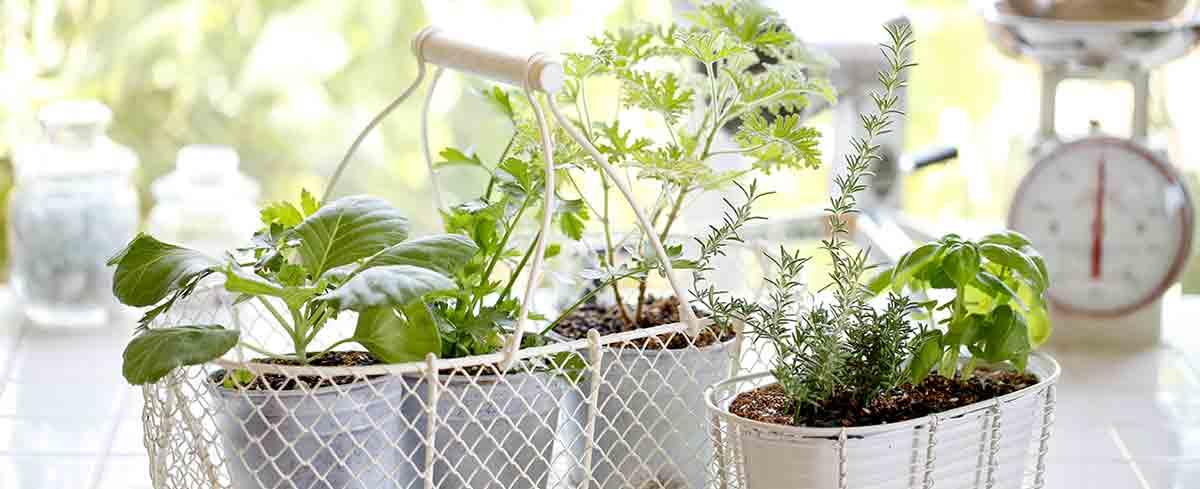 Start Your Kitchen Garden with Burston
