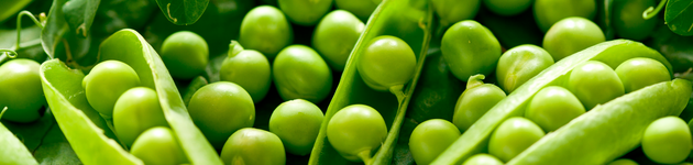 Grow Your Own Peas - Burston Garden Centre