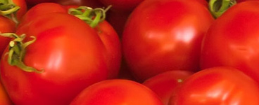 Grow Your Own Tomatoes - Burston Garden Centre
