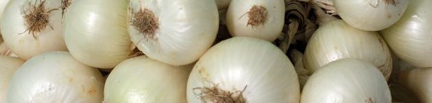 Grow Your Own White Onions - Burston Garden Centre