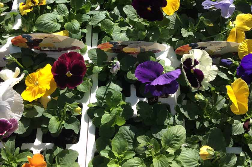Plants at Burston Garden Centre - Bedding