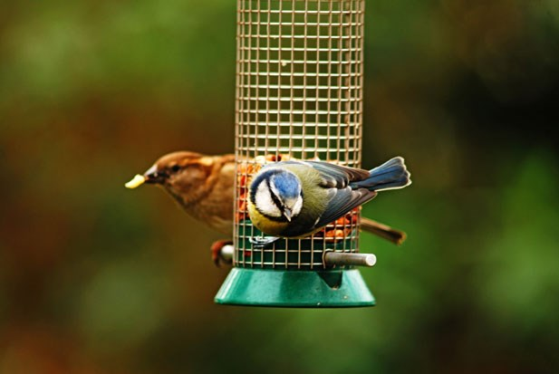 Pet and Bird Care - Bird Feeders