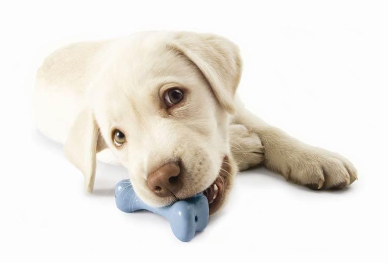 Dog Toys at Burston Garden Centre