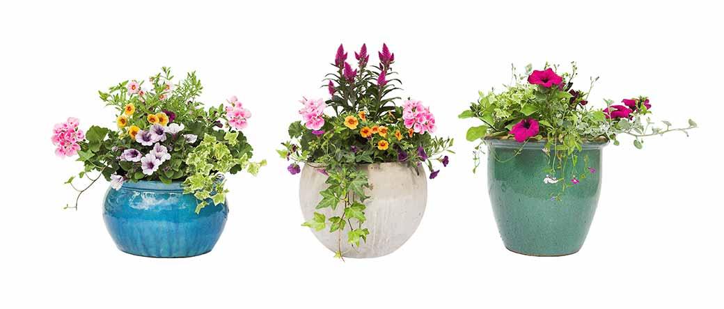 Garden Care - Burston Garden Centre - Plant Pots
