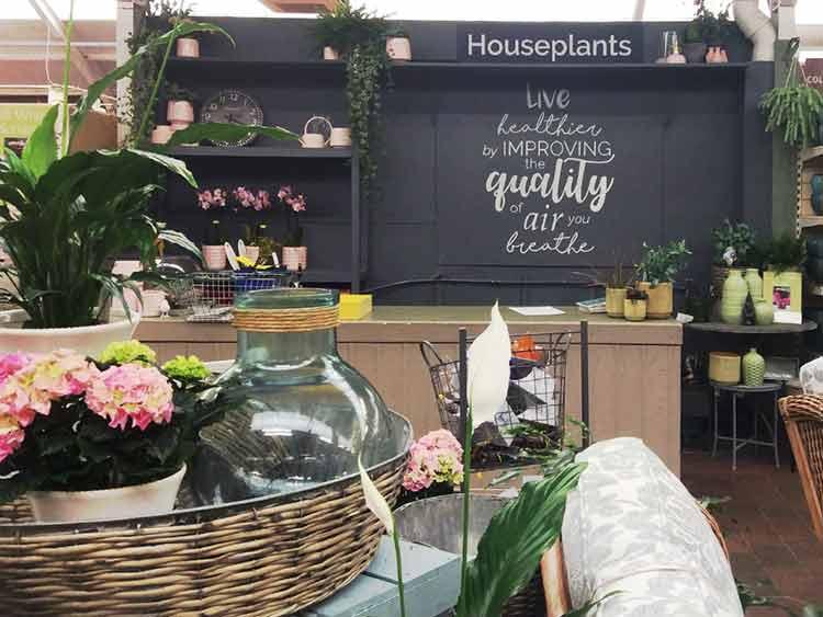 Indoor Living - Indoor Plants