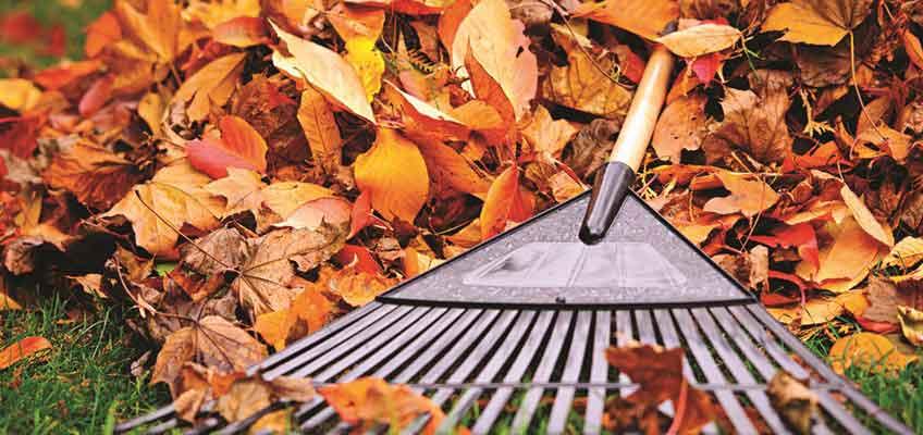 Love the Plot Youve Got - autumn inspiration