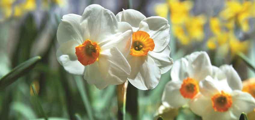 Love the Plot You've Got - spring inspiration