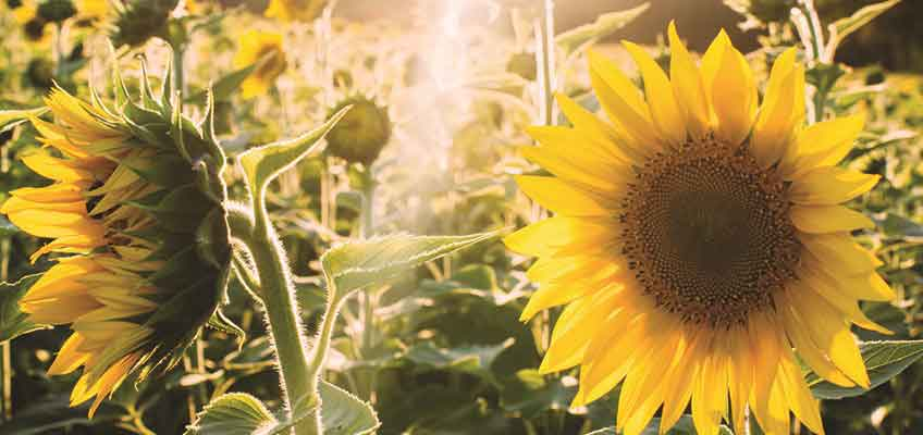 Love the Plot You've Got - Summer inspiration