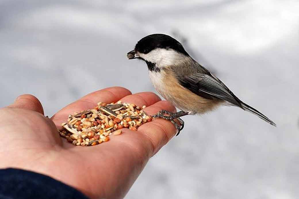 Pet Bird Care - Bird Food