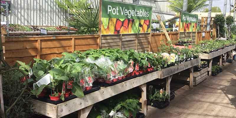 Plants at- Burston Garden Centre - Herbs & Veg