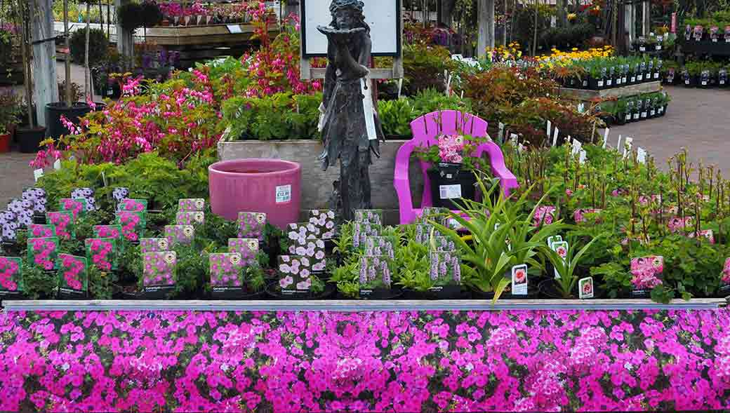 Plants at Burston Garden Centre - Perennials