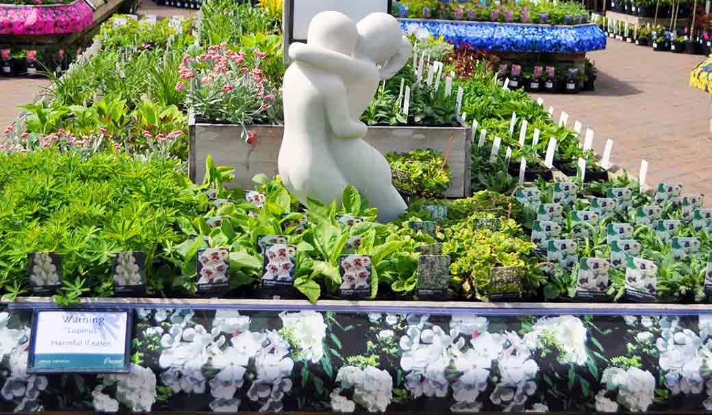 Plants at Burston Garden Centre - Perennials