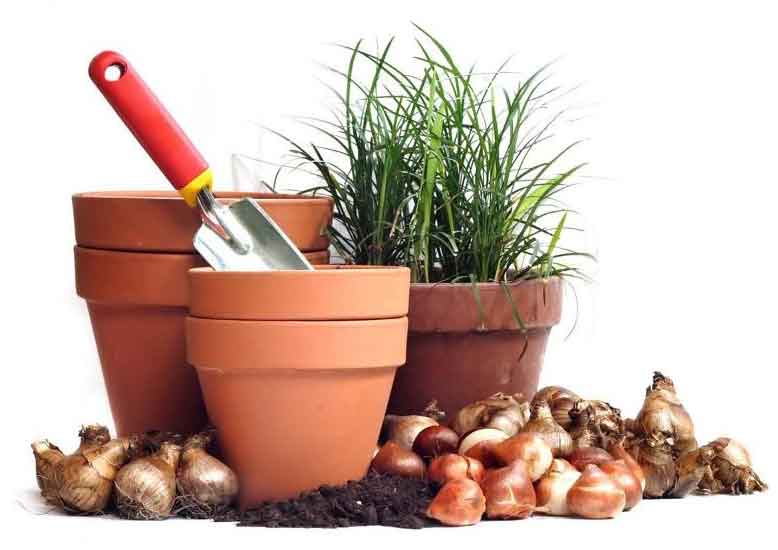 Plants at Burston Garden Centre - Seeds & Bulbs