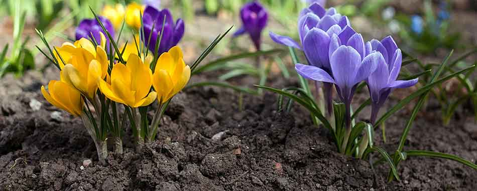 Plants at Burston Garden Centre - Planting Seeds & Bulbs