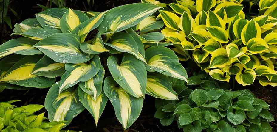 Plants at Burston Garden Centre - Shade