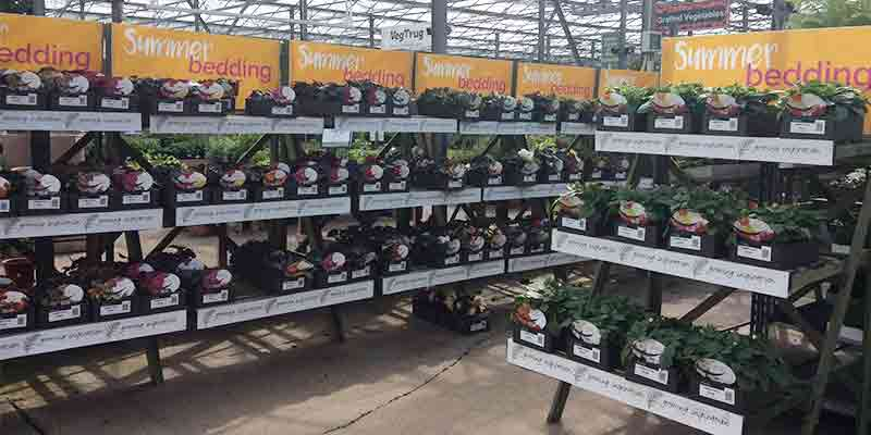 Plants at Burston Garden Centre - Summer Bedding