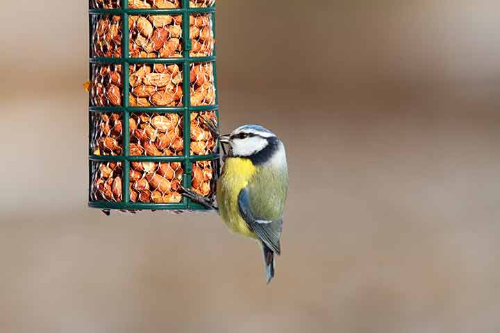 RSPB Bird Feeder - Burston Pet Care