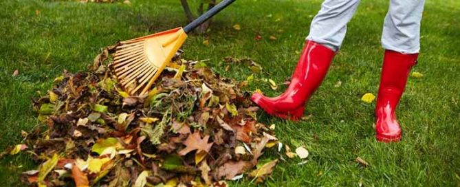 Winter Lawn Care at Burston Garden Centre