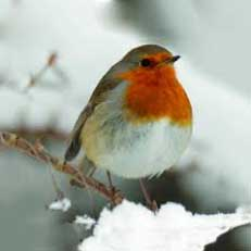 Looking after birds in your garden - blog by Burston Garden Centre
