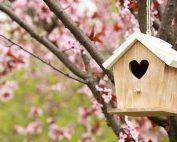 Helping birds in your garden