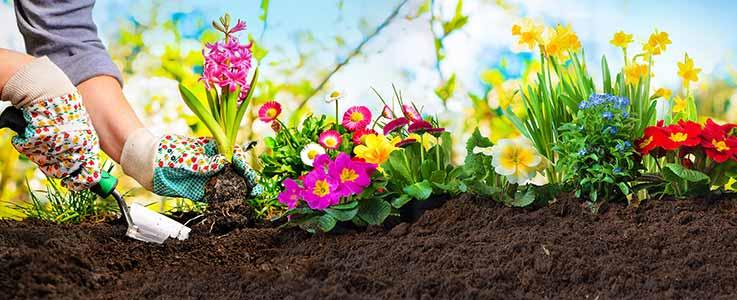 Our Gardens Start to Wake Up - Burston Garden Centre
