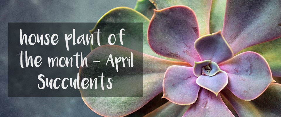 House Plant of The Month - April