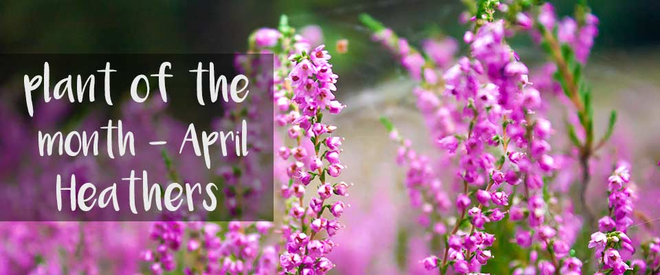 Plant of The Month - April