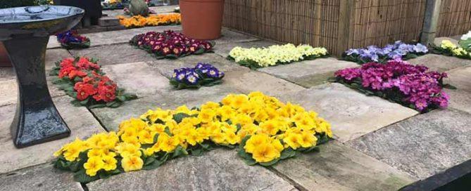 Primrose Festival Burston Garden Centre