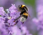 Love Your Bees Day at Burston Garden Centre