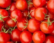 Growing Tomatoes - Burston Garden Centre Blog
